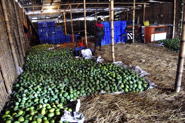 Mango shop of Kansat